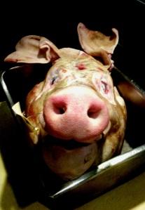 We got a pig.