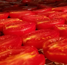 Plum tomatoes starting to dry